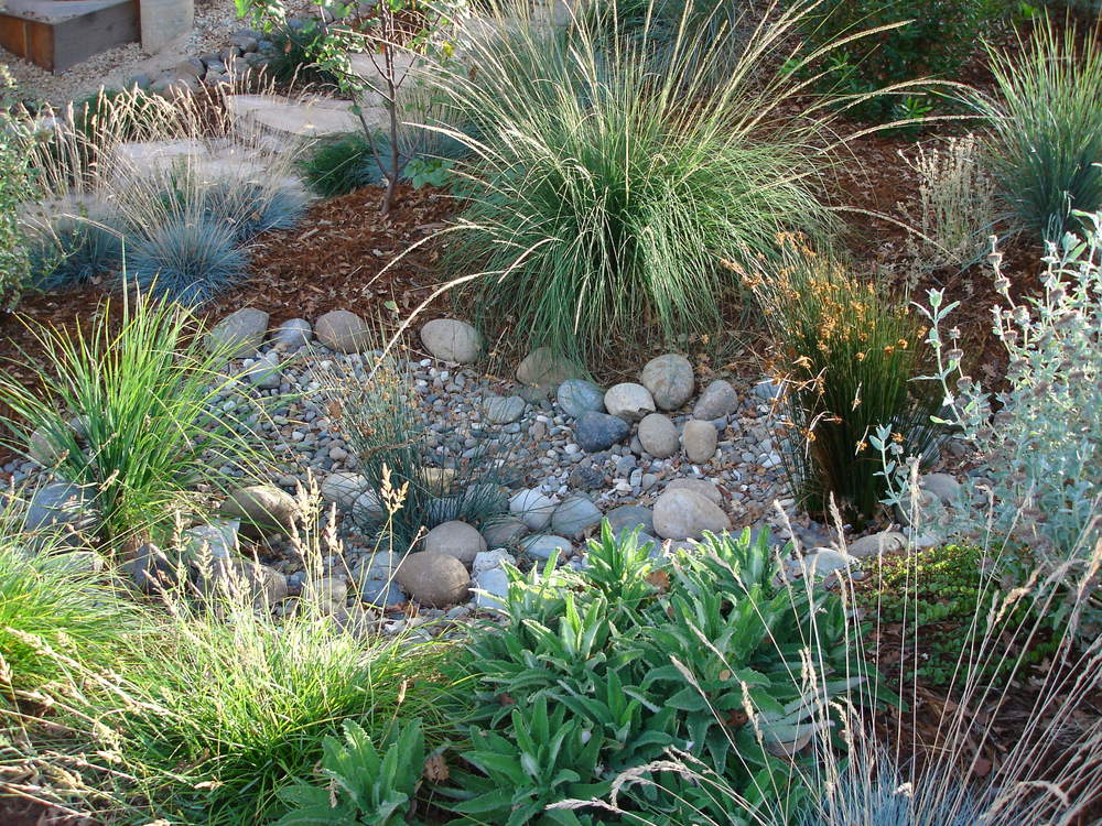 Using California native trees, grasses, and flowers, this is part of rain garden plantin. It is designed to be irrigated by seasonal run-off, slow down storm water flows, and catch floating debris before the water overflows to a natural creek area below the property.