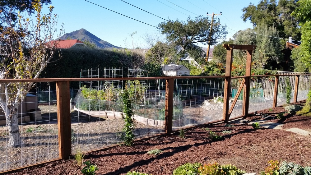 This simple fenceline design was made to corral the chickens but keep an open view into the back gradens. Vines were planted to fill in sections of fence along with other flowering shrubs and grasses to create a soft border between the different garden destinations. These materials are cost effective, clean-lined, and long lasting.