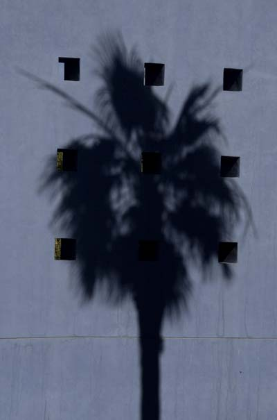 Mesa_Art_Ctr_palm.jpg
