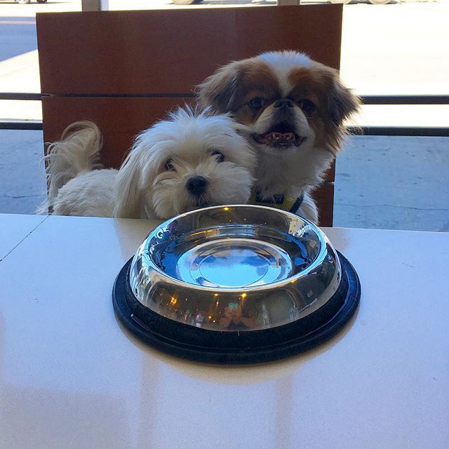 Ollie and Noki are dining with us today #patioseason #dogsofinstagram #dogfriendly