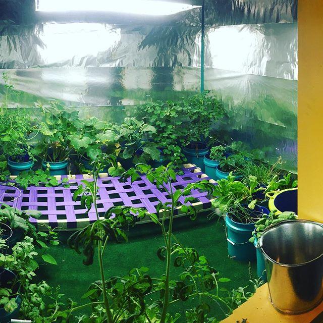 Experiments with indoor gardening. #indoorgarden #sustainablefarming #sculpture #installation #growlight #growroom #familiarworkshop