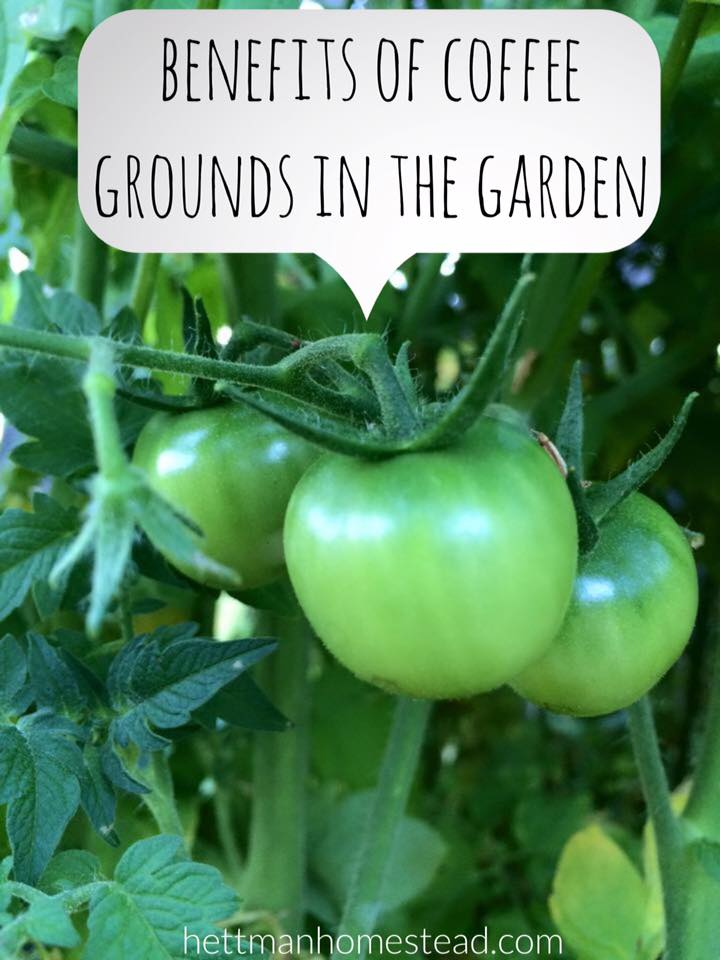 There are many different ways you can use coffee grounds in your garden. I use coffee grounds for composting, homemade fertilizer, natural pest control, ...
