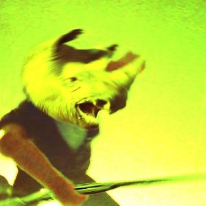 Rhino | Todd Covalcine