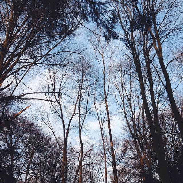 | I like treetops & am thinking I should live in a treehouse.