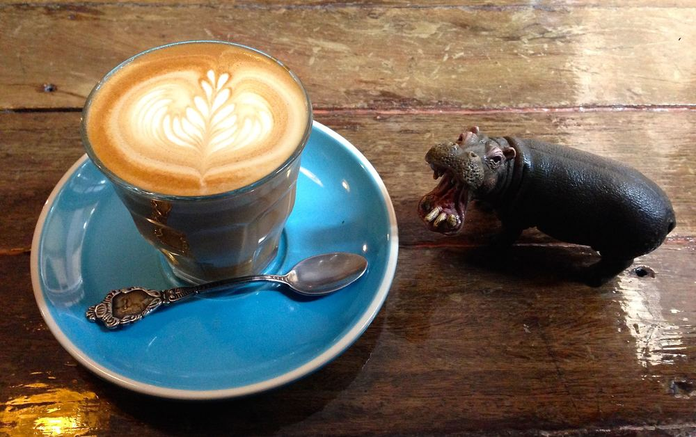 Cabrito 3/4 double flat white. Pictured here with iron rhino