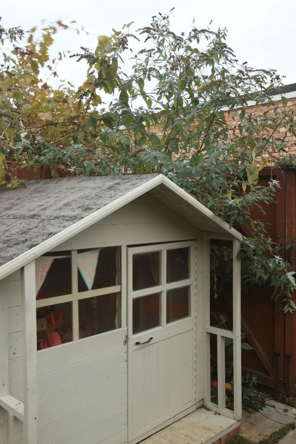 057Budhleia Overgrown Stamford