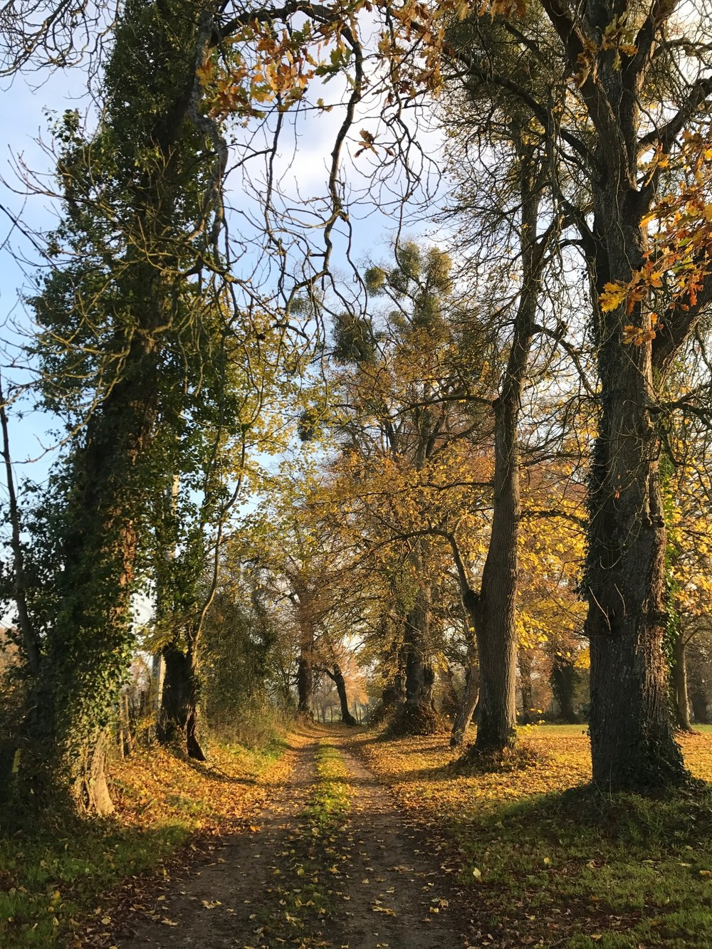 Autumn at Chateau de la Ruche