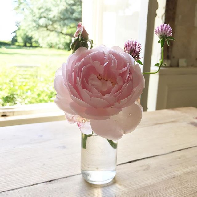 Roses from the garden and some clover picked for me by my smallest boy.