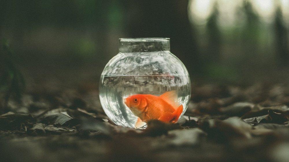 ]fishbowl-tbt.jpg