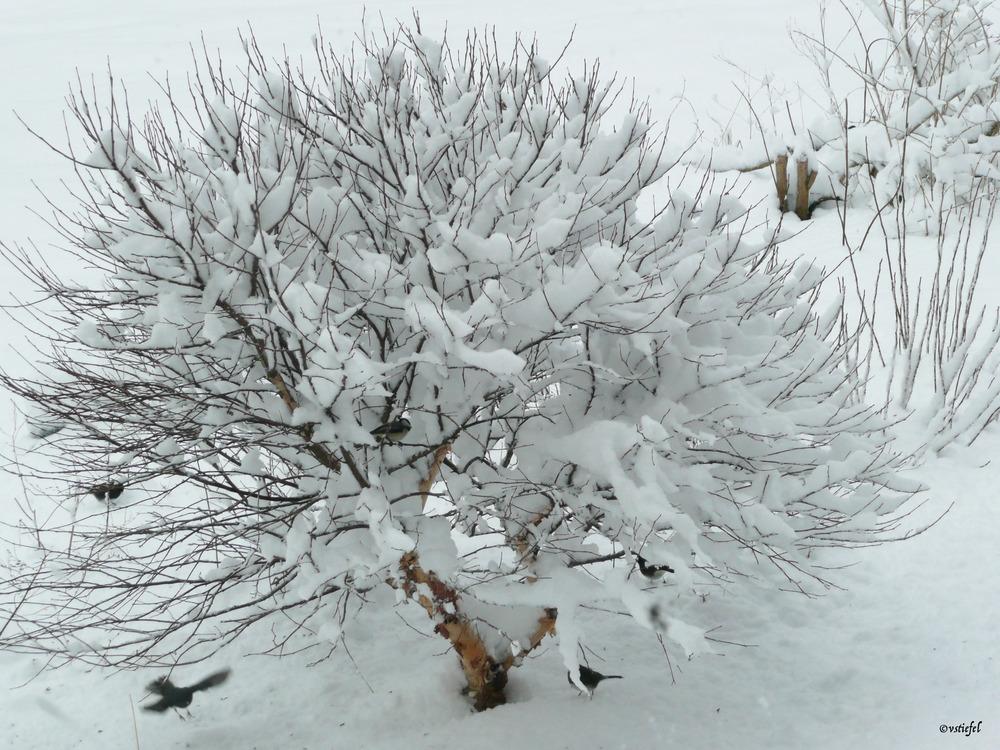 Hancock Snow.jpg