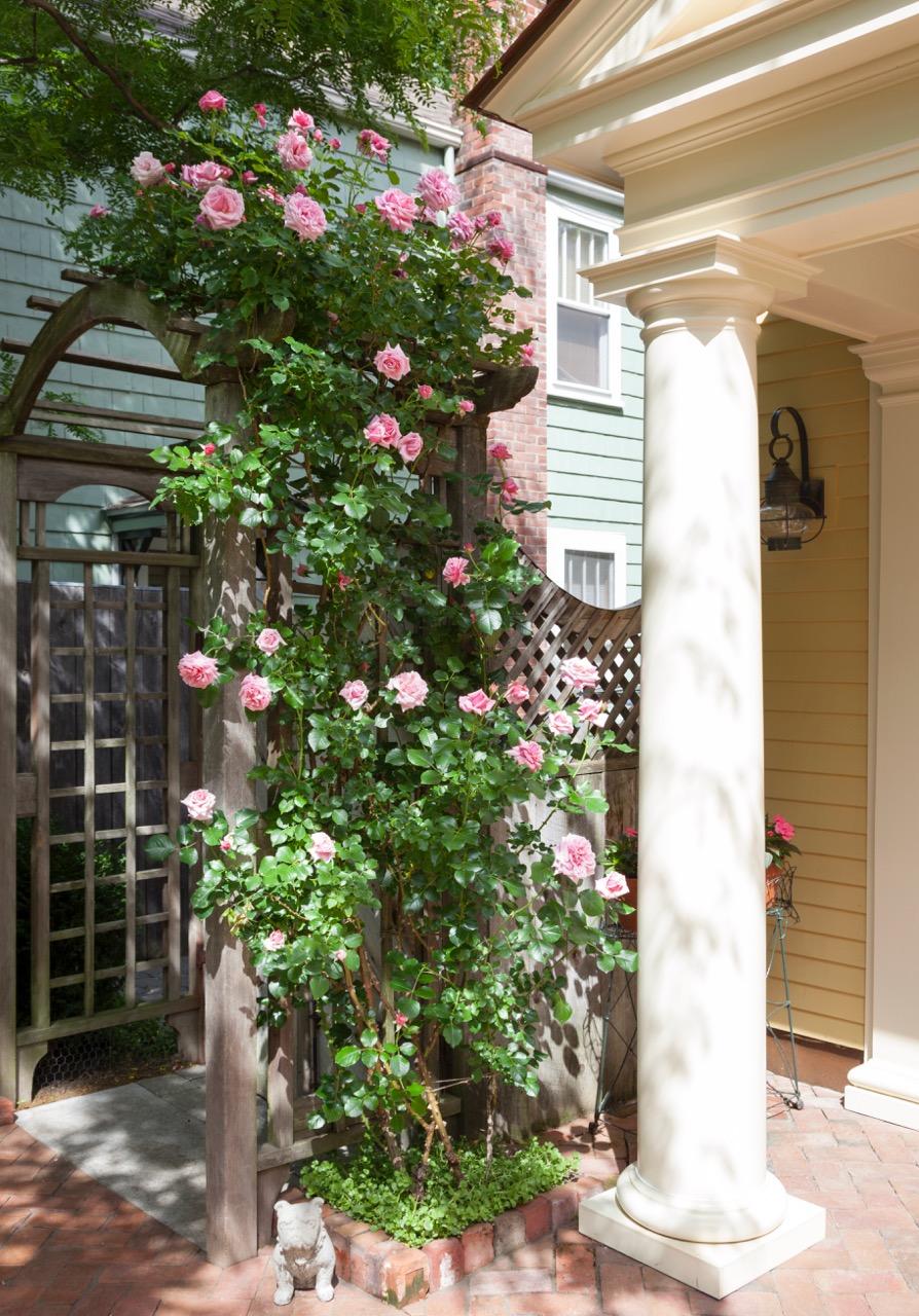Michael Cebula & Jeffrey Adams Garden