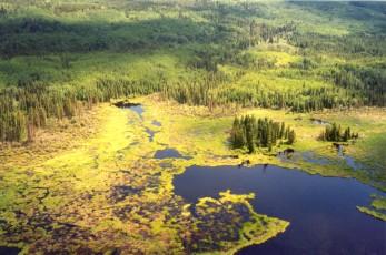 wetland_complex.jpg