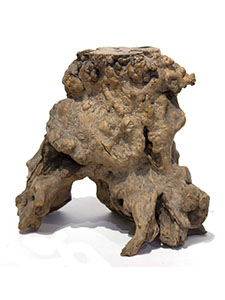 NM-0112-knotted-stump_00.jpg