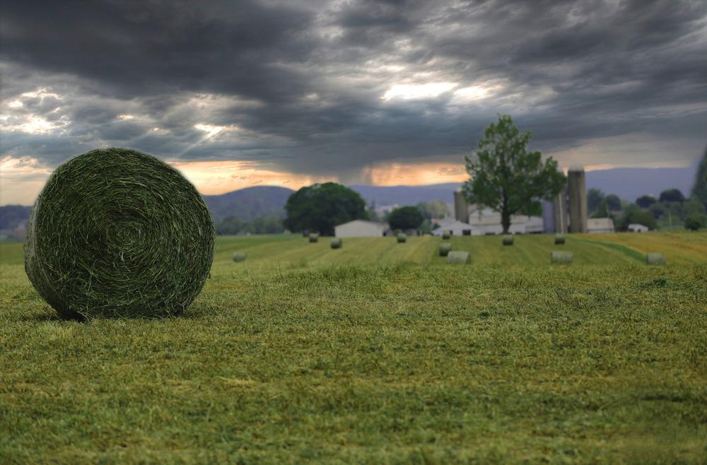 Round hail bale farm.jpg