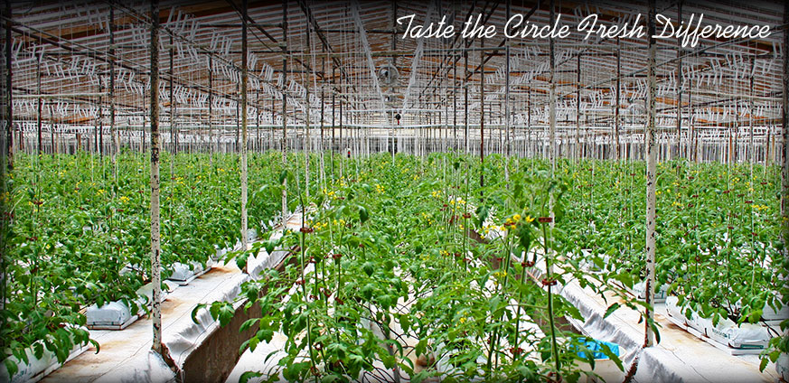 photo courtesy of Circle Fresh Farms Website: http://www.organic-produce.co/