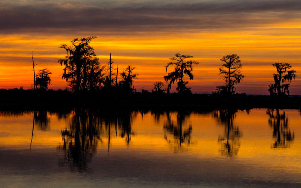 Swamp Reflections-400.jpg
