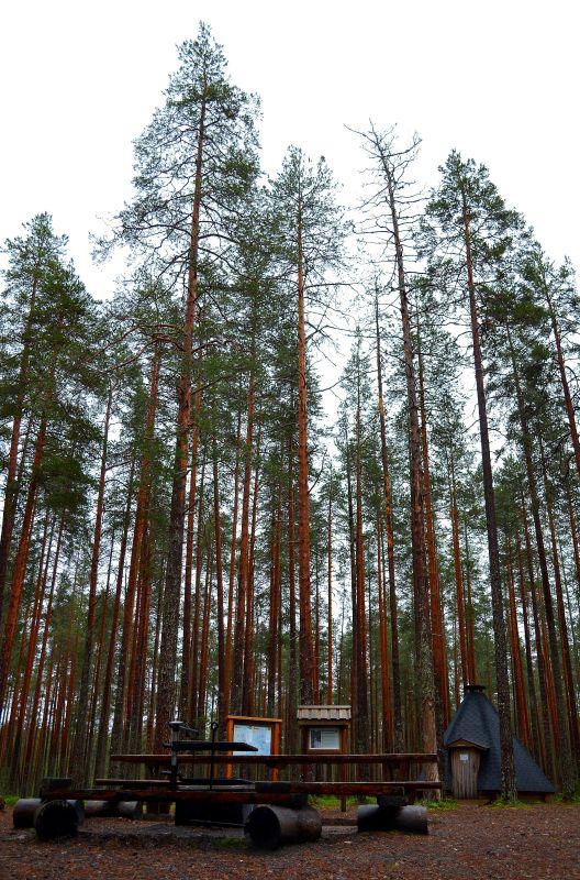 Pitkäjärven kota.