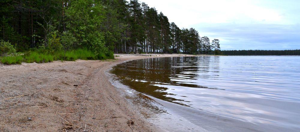 Suomunjärven rannalla on yhteensä yli 20km hiekkarantaa. Vesi oli vielä viileää helteitä odotellessa.