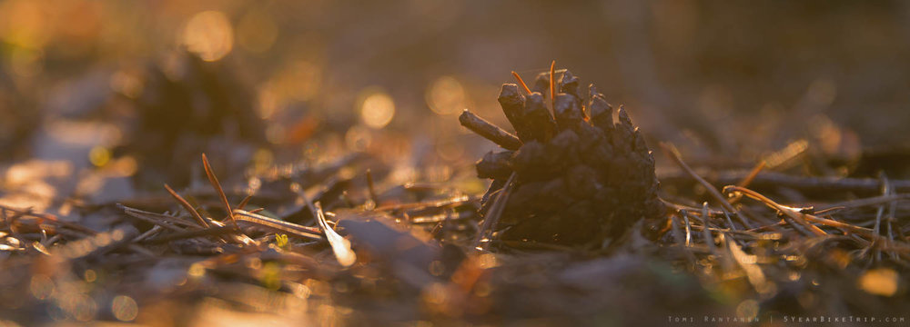 Just a backlit pine cone doing its thing.
