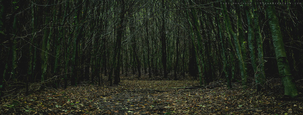 I'll take a horror movie forest over a shitty camping ground any day.