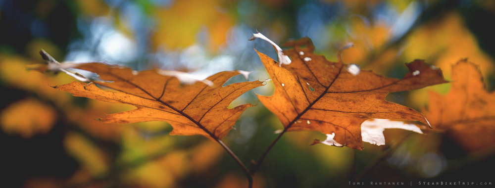 Autumn leaves in the morning.