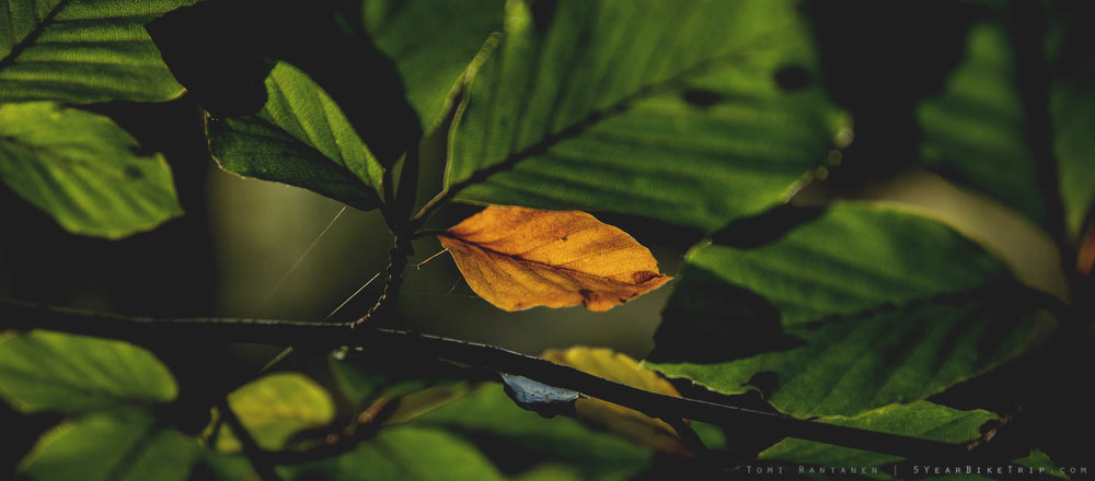 Some leaves are more quick to accept change than others.