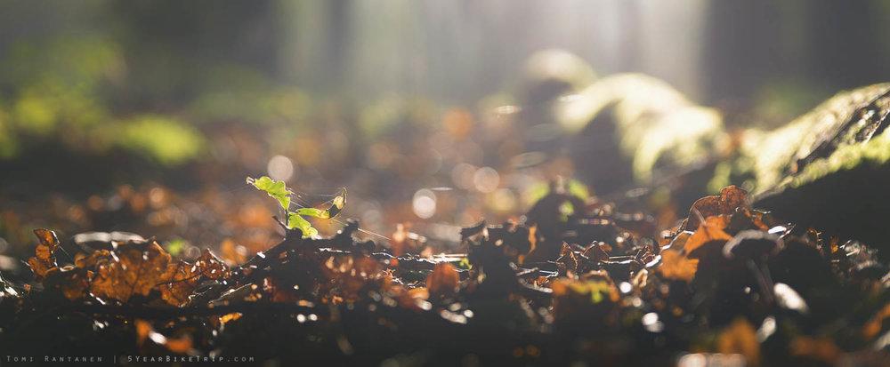 ... Western Europe, forest floor ...