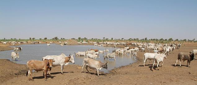 water-hole-cattle.jpg