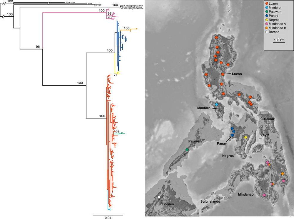Brachypteryx Philippines.jpg