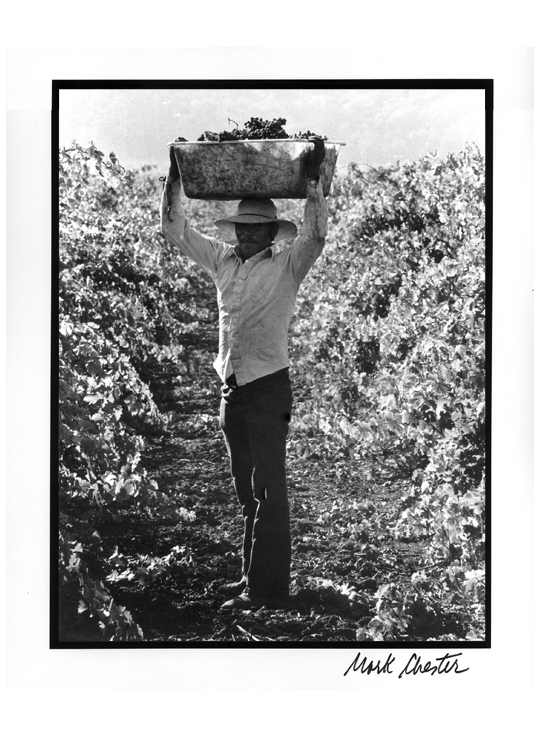 Grape Worker