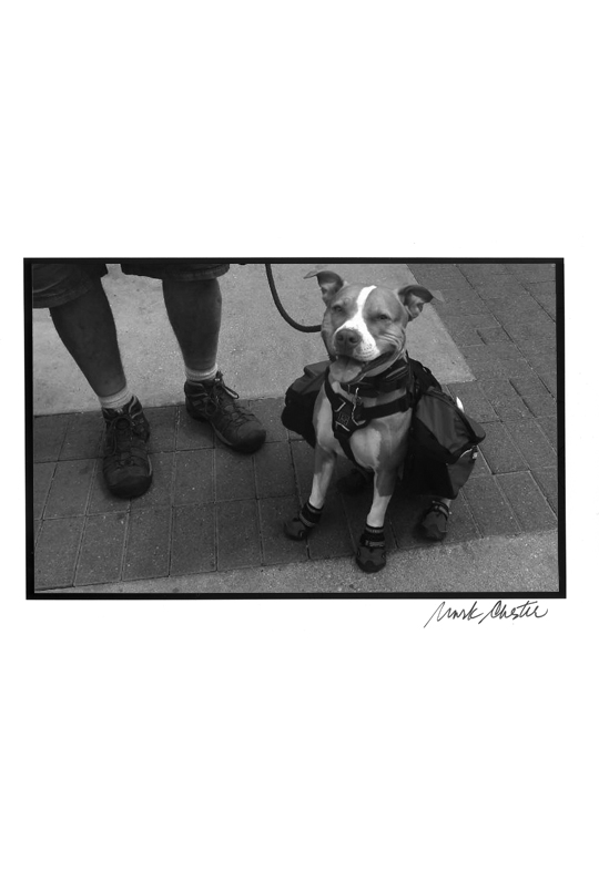 Hiker Dog
