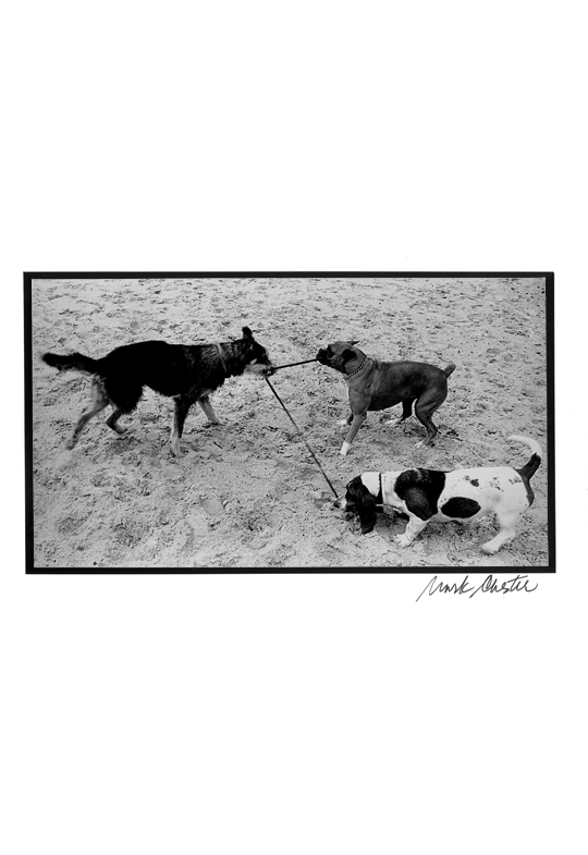 Three Dogs and a Leash