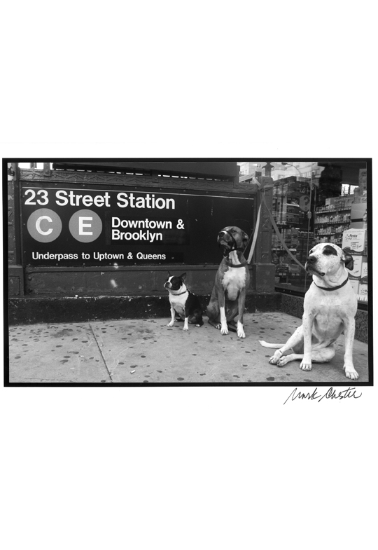 Three Dogs by the Subway