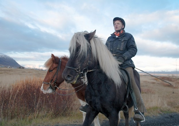 Icelandic Horses with Rider, on a trail near Route 1