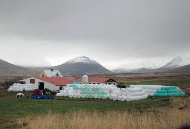 Hay in Plastic