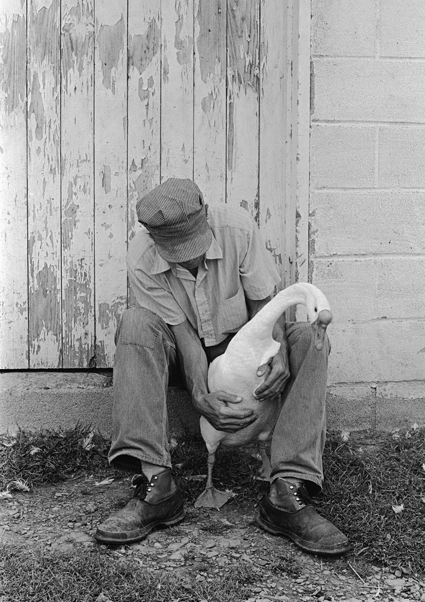 Calvin and the Goose Napoli, NY 1974