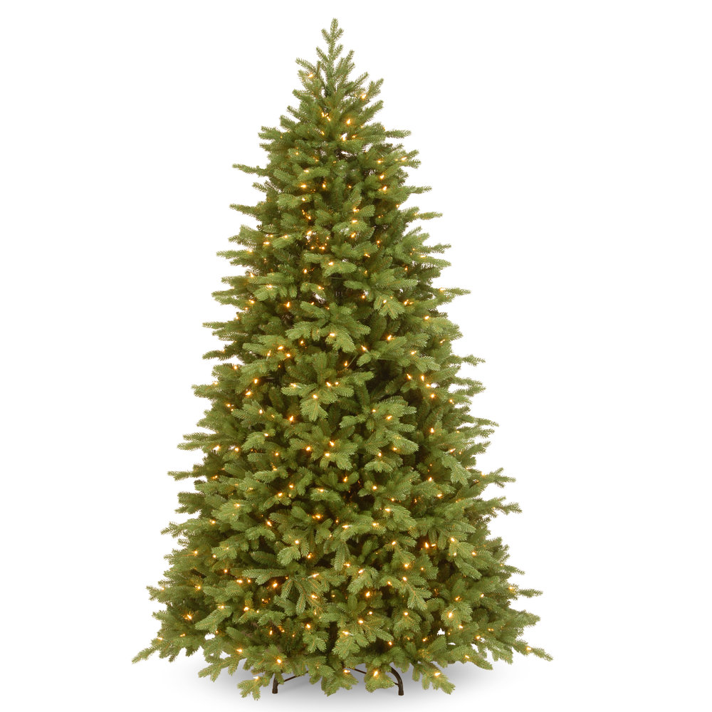 HIGHLAND FRASIER FIR