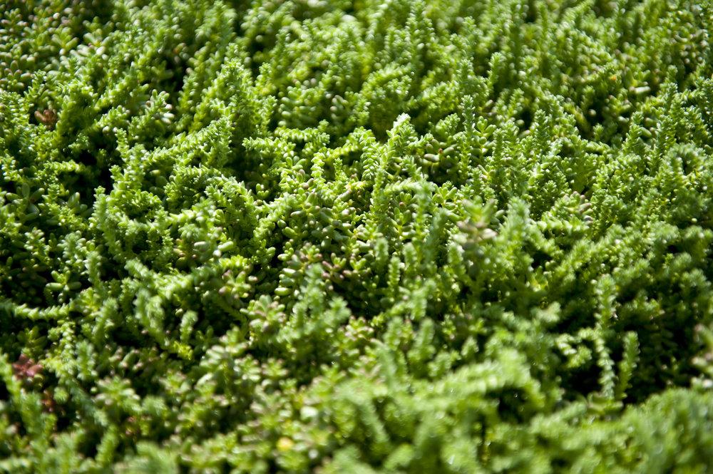 d hamline green roof snapshot kn04 sized.jpg