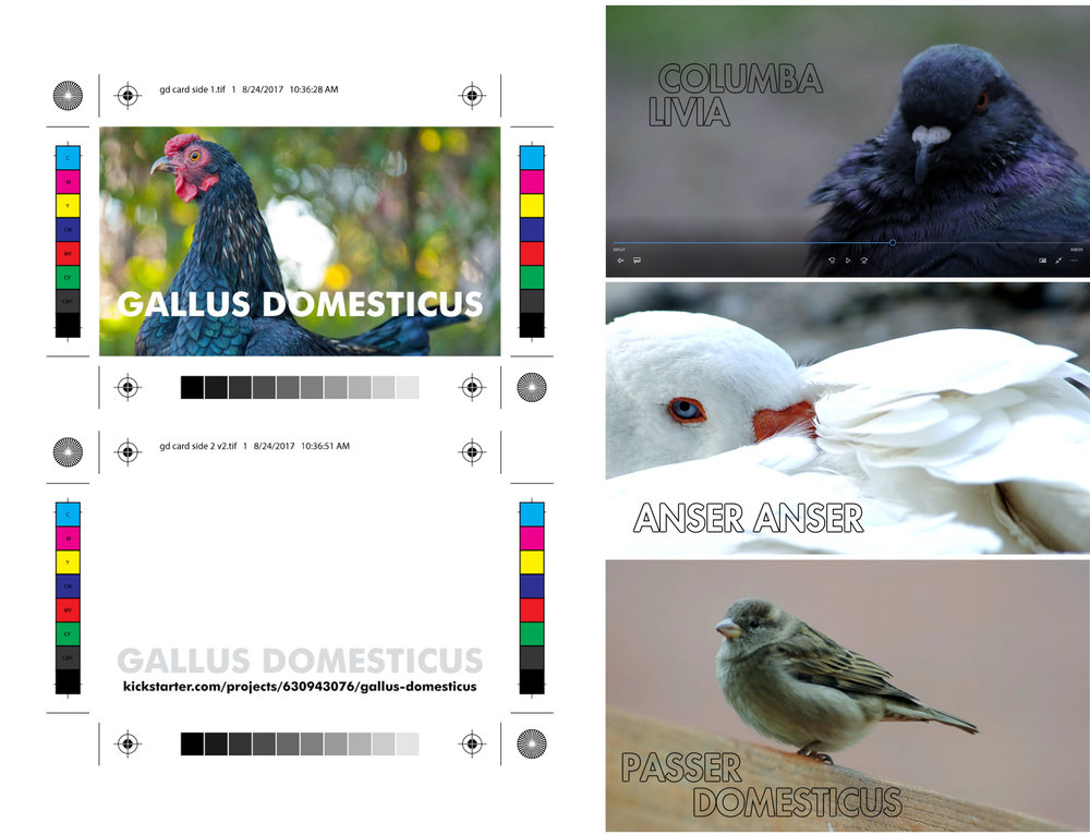 Film Promo Materials