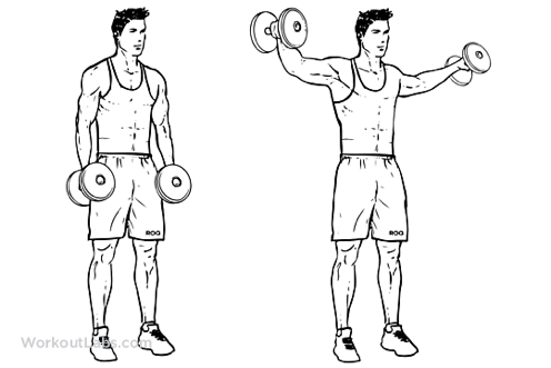 lateral raises.png