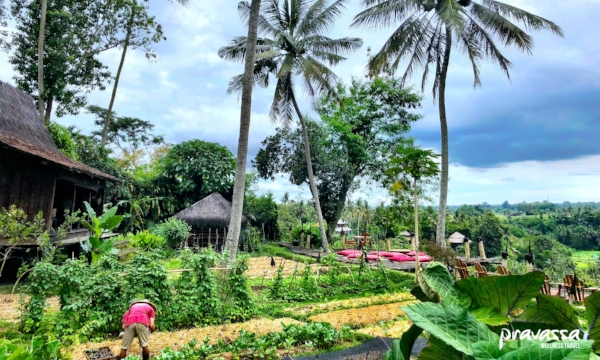 For  Wellness aficionados  ready for a glass of green juice overlooking endless rice fields, a built in yoga community, and local healers.