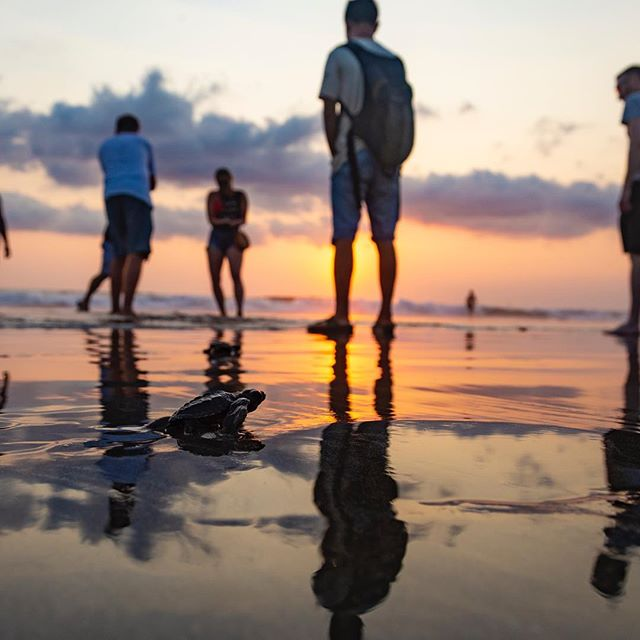 Thinking of our sea turtles roaming the ocean  Photo Credit: @trubavinphoto