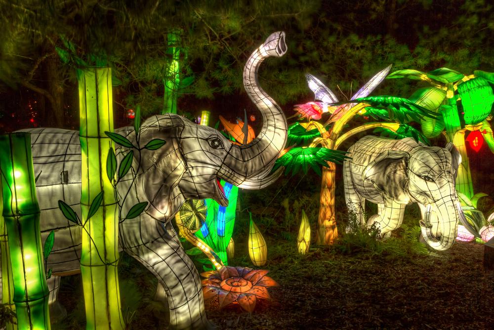 20140920_Botanical Garden-Gardens of Light_IMG_6048_49_50hdr-M.jpg