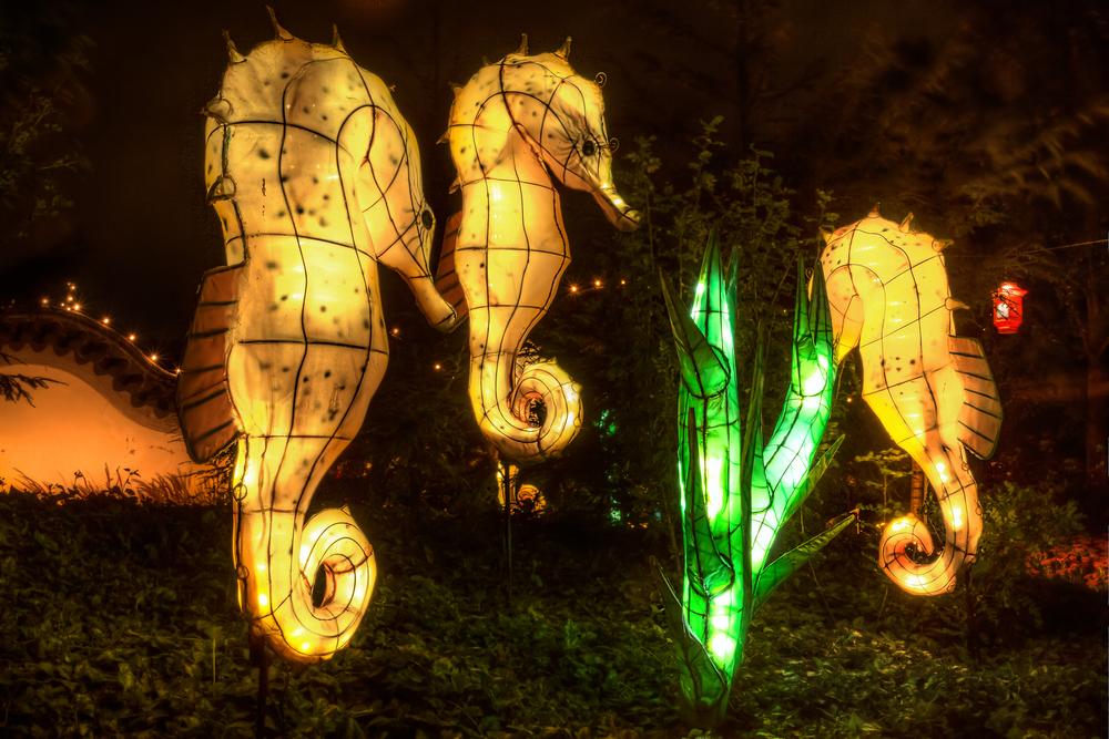 20140920_Botanical Garden-Gardens of Light_IMG_6089_8_7hdr-M.jpg