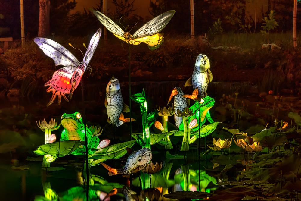 20140920_Botanical Garden-Gardens of Light_IMG_6092_1_0hdr-M.jpg