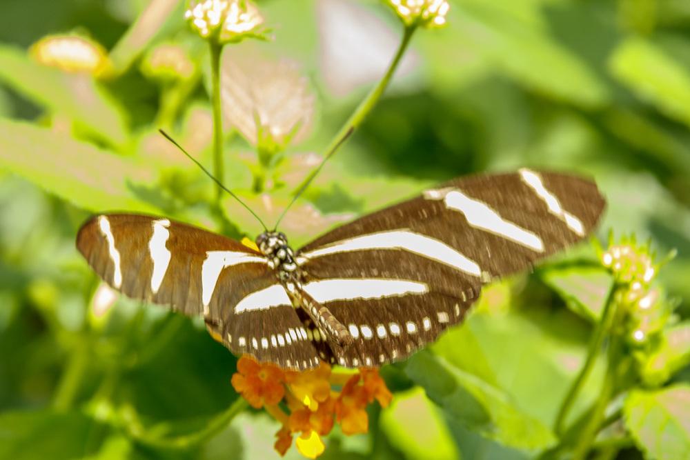 2015-07_22_Niagara Falls_Day 4_Butterfly Conservatory & Botanical Gardens_0010.jpg