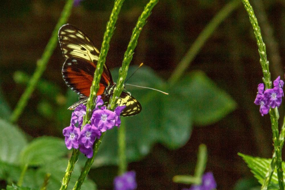2015-07_22_Niagara Falls_Day 4_Butterfly Conservatory & Botanical Gardens_0007.jpg