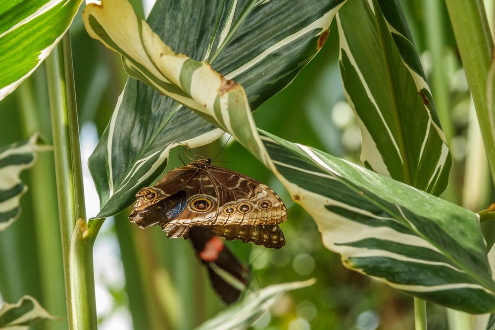 2015-07_22_Niagara Falls_Day 4_Butterfly Conservatory & Botanical Gardens_0015.jpg