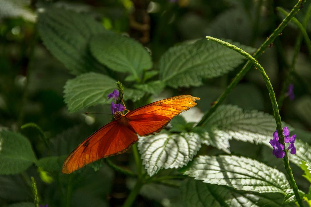2015-07_22_Niagara Falls_Day 4_Butterfly Conservatory & Botanical Gardens_0018.jpg