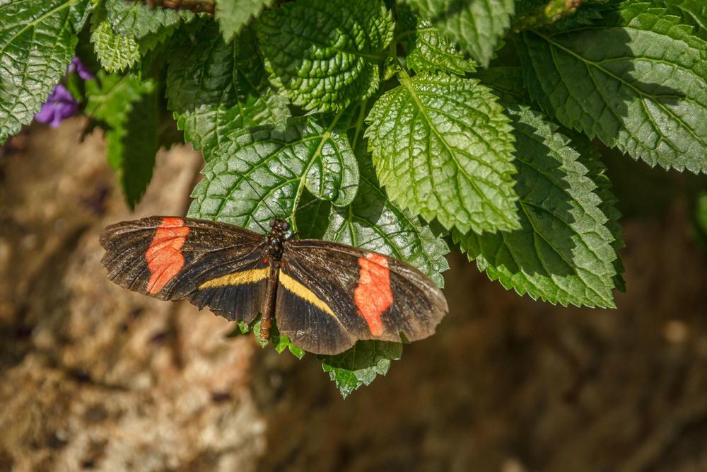 2015-07_22_Niagara Falls_Day 4_Butterfly Conservatory & Botanical Gardens_0024.jpg